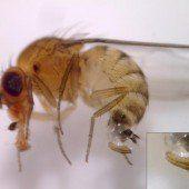Angst vor Fliege