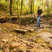 Walderlebnispfad ist nur noch eine Sackgasse