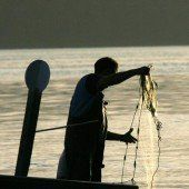 Gute Nachrichten für unsere Bodenseefischer: Stichlinge werden weniger. A4