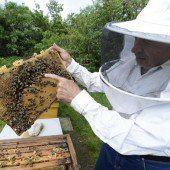 Bienen verdeutlichen Macht und Ohnmacht