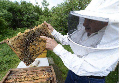 Nicht nur Hobby- und Berufsimker sorgen sich zu Recht um das Wohlergehen der Bienen. apa