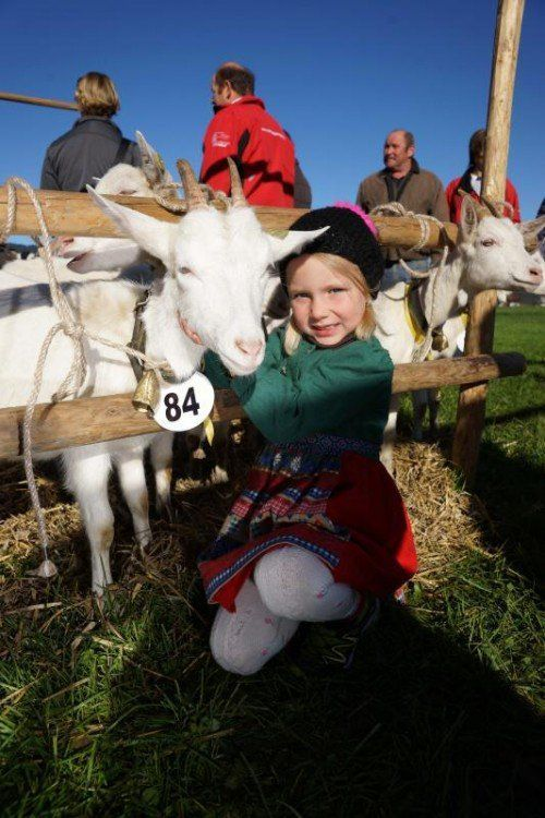 Bei den kleinen Besuchern stets besonders angesagt: Die tierischen Hauptdarsteller.  Foto: L. Berchtold