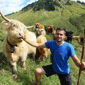 Mit exotischem Vieh Lawinengefahr bekämpfen