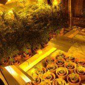 Vorarlberger Polizei hebt Cannabis-Plantagen aus