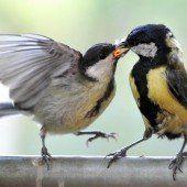 Klimawandel dezimiert Europas Vogelwelt