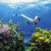 Experten fordern mehr Schutz für Riff