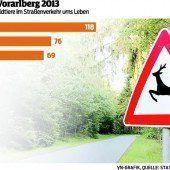 Achtung: Auf den Vorarlberger Straßen geht es wieder wild zu