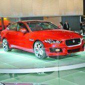 Jaguar eine Nummer kleiner