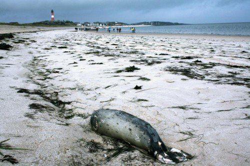 Täglich finden Seehundjäger an den Stränden tote Tiere – seit Oktober waren es rund 180.  Foto: dpa