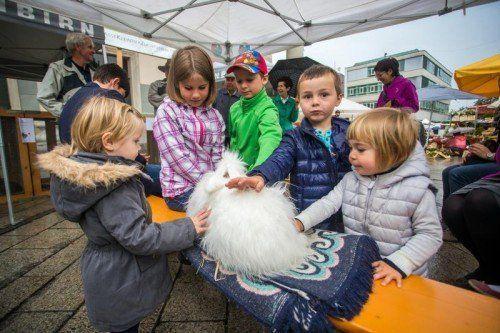 Vergangenen Samstag hatten besonders die Kinder viel Freude mit den Tieren des Rassekleintierzuchtverbandes Dornbirn. Fotos: VN/Steurer