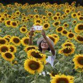 Selfie im schönen Blumenmeer