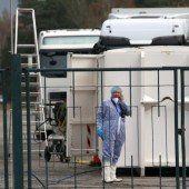 Gefährliche Vogelgrippe: 31.000 Puten getötet
