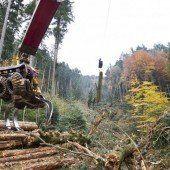 Dem Schanzgraben gehts ans Holz