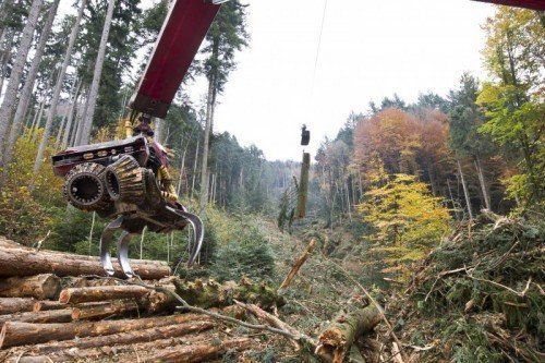 Rund 500 Festmeter Holz werden mittels Seilkran aus dem Tobel transportiert.  Foto: VN/Paulitsch