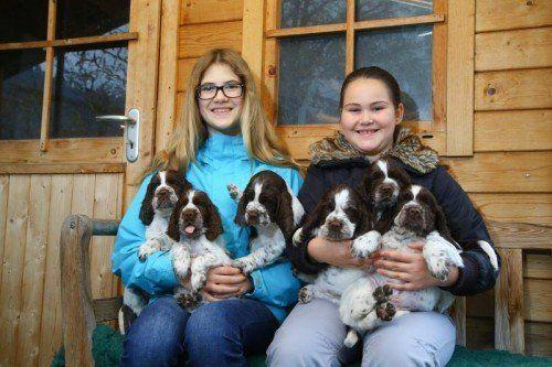 Tierbaby der Woche; die 13jährige Isabel und 10jährige Laura aus Nüziders mit 6 English Springer Spaniel Welpen; 3 Welpen sind noch zu haben; sehr Familienfreundliche Hunde; Infos unter +43 676 7252536
