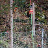 Bäume per Hubschrauber weggebracht