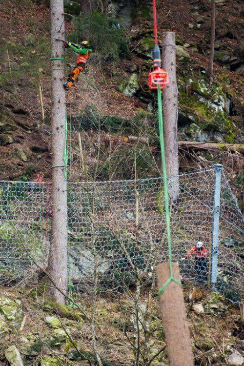 Bei der Skisprungschanze im Montafon werden Bäume abtransportiert. Sie müssen ganz abtransportiert werden, weil sie sonst auf die Schanze fallen könnten, Abtransport Bäume bei der Skischanze