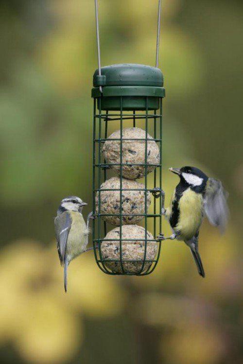 Blau- und Kohlmeise friedlich vereint: Seit der Winter da ist, drängen sich die Vögel wieder an den Futterhäuschen. Foto: BirdLife