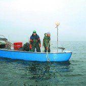 Fischer am See beklagen wieder geringere Fänge