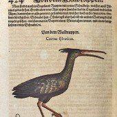 Ein Vogel ersetzt den Mohrenkopf