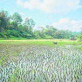 Torajakultur im Hochland Sulawesis