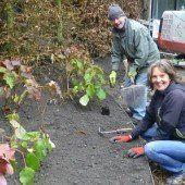 290 Pflanzen für den Innenhof im Beck-Areal