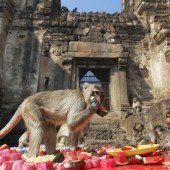 Affenfest in Thailand