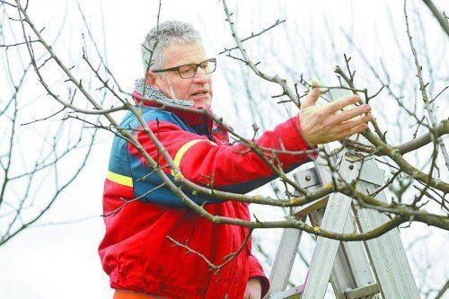 Baumexperte Richard Hollenstein in Aktion: Ein guter Baumschnitt stärkt den Baum.  Foto: ogv.at/Dietmar Mathis