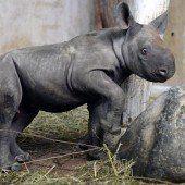 Seltene Geburt im Züricher Zoo