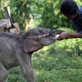 Tiermassaker für Palmöl