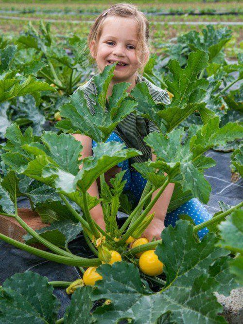 Die Umsetzung der Ökoland-Strategie steht auf der Agenda des Landes. Unser Bild zeigt die kleine Emma am Frimahof in Ludesch.
