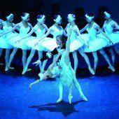 Der Tanz der Schwäne