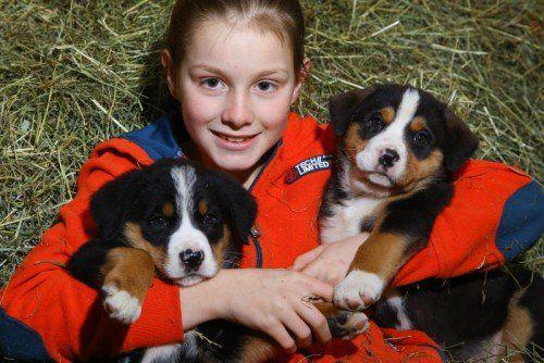 Hunde Tierbaby der Woche mit Appenzeller Sennhund Mischling 7 Wochen alt mit der 11jährigen Joleen aus Lustenau