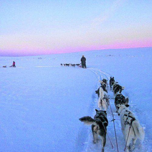 Huskys lieben das Laufen im Schnee. Foto: Image Bank Sweden