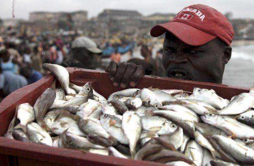 Lange galt Ghanas Küste als eines der fischreichsten Gewässer Afrikas. Jetzt werden 50 Prozent des Fischbedarfs aus dem Ausland importiert.
