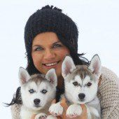 Entzückende Husky-Welpen