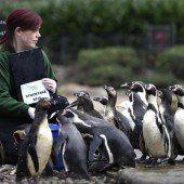 Inventur im Londoner Zoo