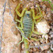 Von Skorpion gestochen