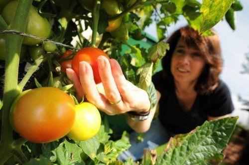 Gemüse ist ein wichtiger Baustein für eine ausgewogene Ernährung, die es braucht, um Diabetes zu vermeiden.  Foto: Symbol Stiplovsek