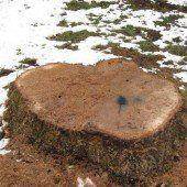 Wer hat den Baum gefällt?