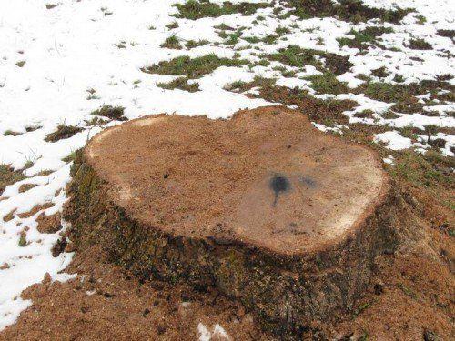 Nur ein Baumstumpf ist von der markanten Eiche übrig.  privat
