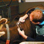 TBC-Tests: Im nächsten Jahr nur Stichproben