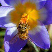 Bienenschutz