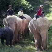 Neunter Weißer Elefant in Myanmar gefangen