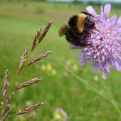 Oasen für Bienen und Insekten schaffen
