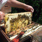 Wichtigkeit von Bienen