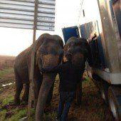 Elefanten bewahrten Lkw vor Sturz in Graben