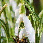 Behausungen für Bienen