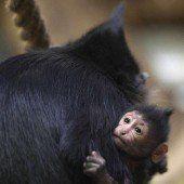 Erstes Baby