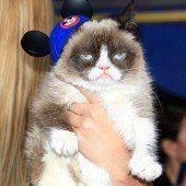 Grumpy Cat bei Premiere